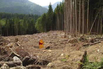 森林破壊 プーさん.jpg